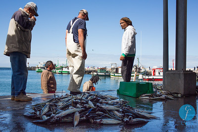 KALK BAY AND CAPE TOWN
