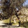 Calla_20100313_Spen_B_Slides_010