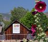 CSA gardens, including a vineyard