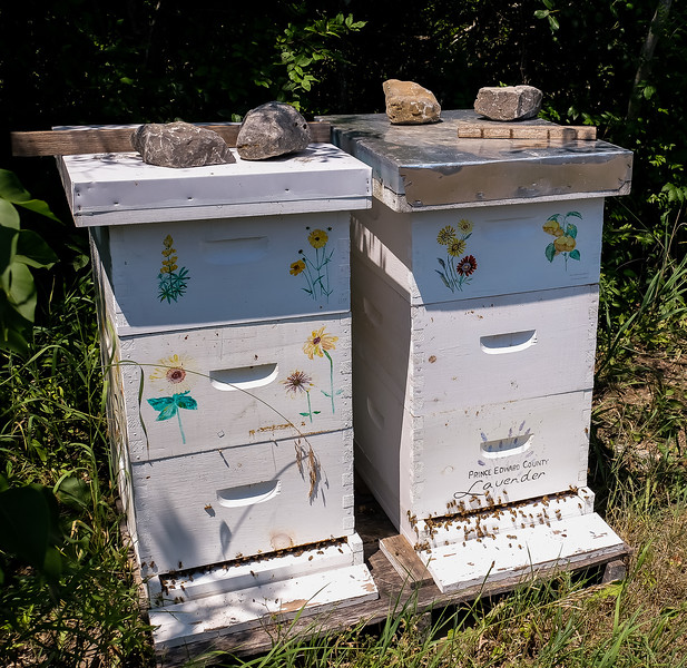 Honey is extracted from bee hives at the edge of the fields, and sold in the shop.