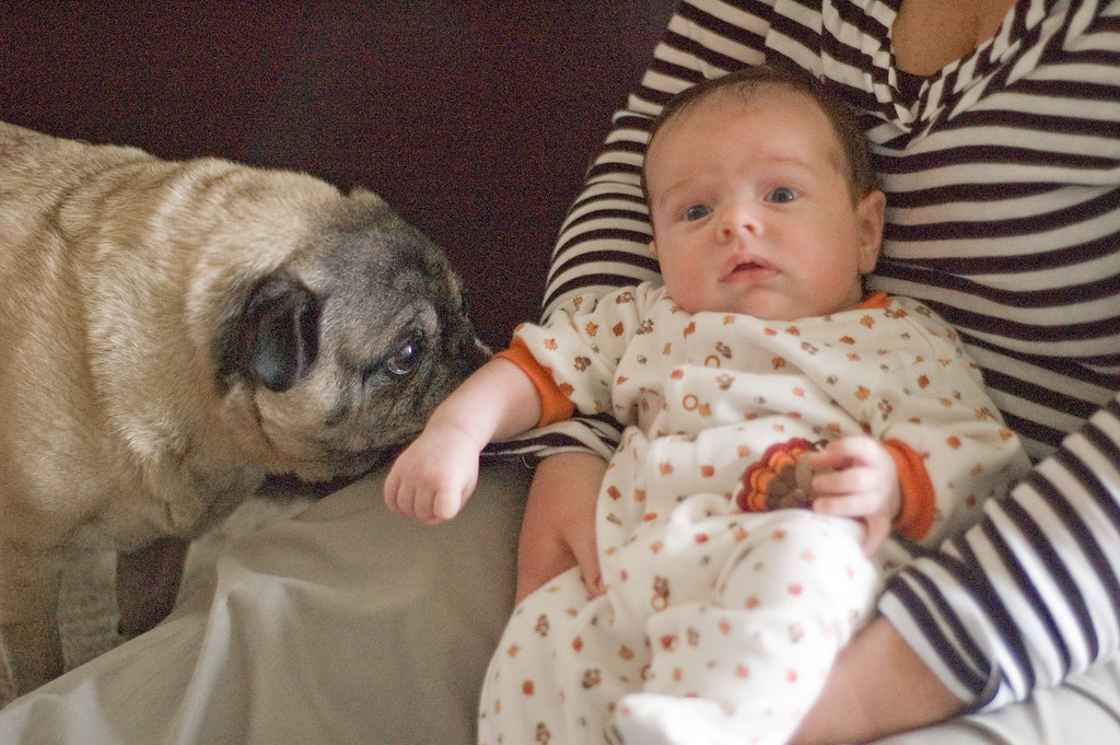 It's my old pal Pugsly. What's shaking?