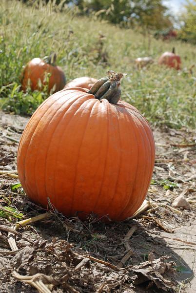 The perfect pumpkin!