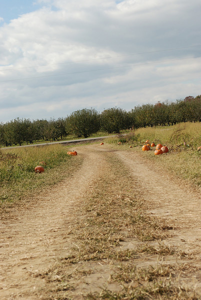 Down this road there is a perfect pumpkin... somewhere!