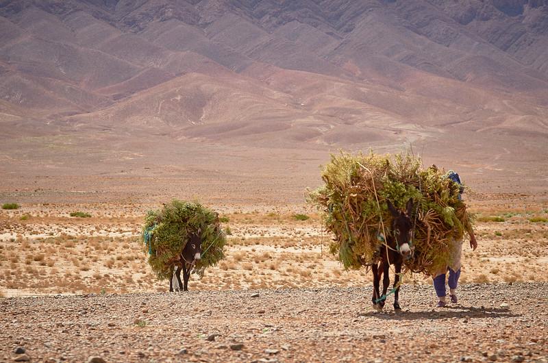 THE DRY FARMLAND - MAROCCO SERIES