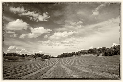 Hay Cutting Day (B&W)