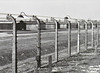 AUSCHWITZ BIRKENAU - In the foreground there is the camp fence and beyond it there are the wooden barracks of the quarantine sector.