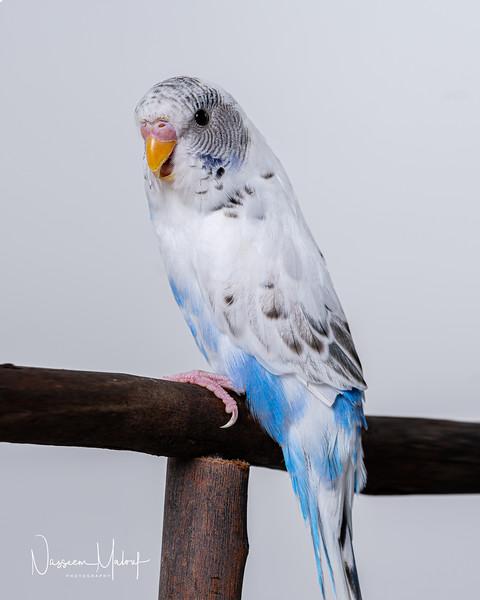 BIRD SHOOT (DD) 1219-5-Edit.jpg