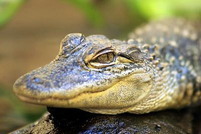 Baby Gator World Wildlife Zoo