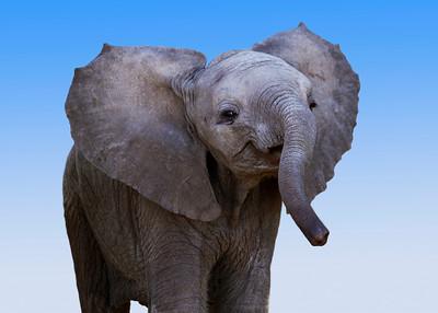 BABY ELEPHANT - KENYA