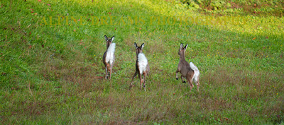 WHITETAILS-on-the-MOVE
