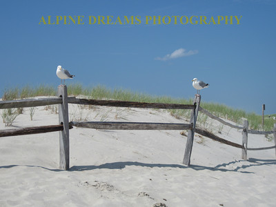 GULLS-ON-A-FENCE-2