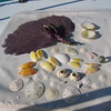 Kate's beach walk haul. Bahamas.
