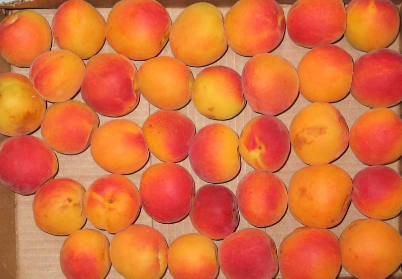 A bilge full of fruit.