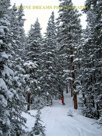 POWDER in the TREES!