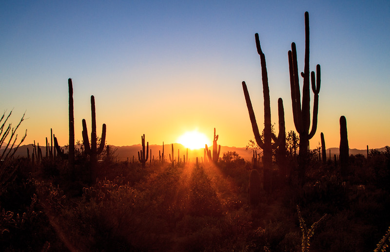 Afterglow - Saguaro National Park