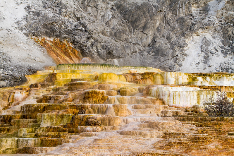 Mineralized - Mammoth Springs, Yellowstone National Park