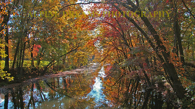 Called Fall Canopy Canal this shot had vibrant colors, reflections and great contrast with the bark of the trees. I love this one.