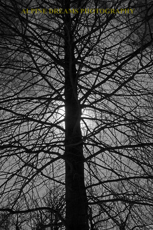 tree shadow bw