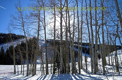 Simply called   (ASPEN Beauty)  this stand of ASPENS with the afternoon sun directly behind them along with a jet plume and bright blue skies made this picture jump out at you.