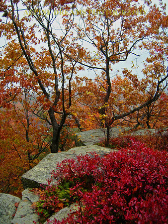 POLLY's ROCK with the fall colors on fire!  AWESOME!