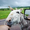 Hungry mule ;-)