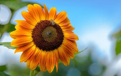 Sunny #2  :-)