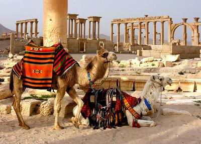 PALMYRA - SYRIA