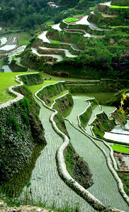 BANAUE RICE TERRACES - PHILIPPINES