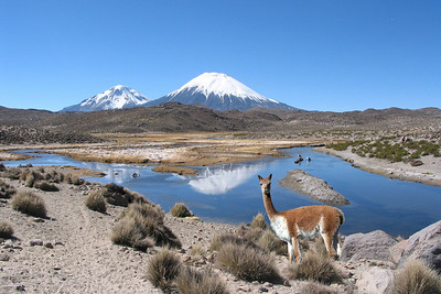 LAUCA NATIONAL PARK - CHILE