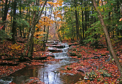 CRYSTAL BROOK  BEAUTY IN THE FALL      name says it all!
