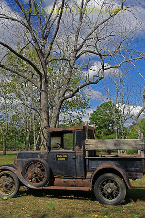 OLD-TRUCK-and-TREE