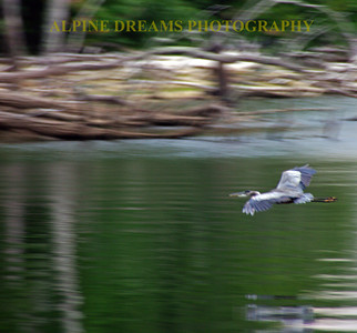 HERON-on-the-MOVE
