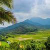 Panorama Kauai Taro farm