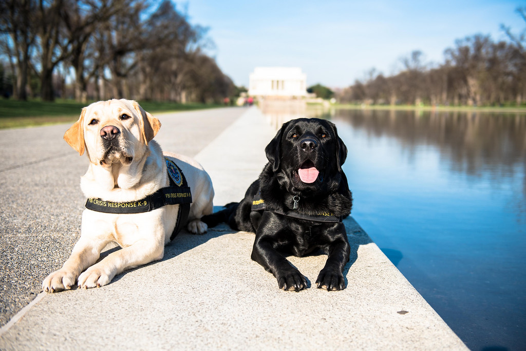 . Taking a break are a couple K-9 dogs who work with the FBI\'s crisis response team.