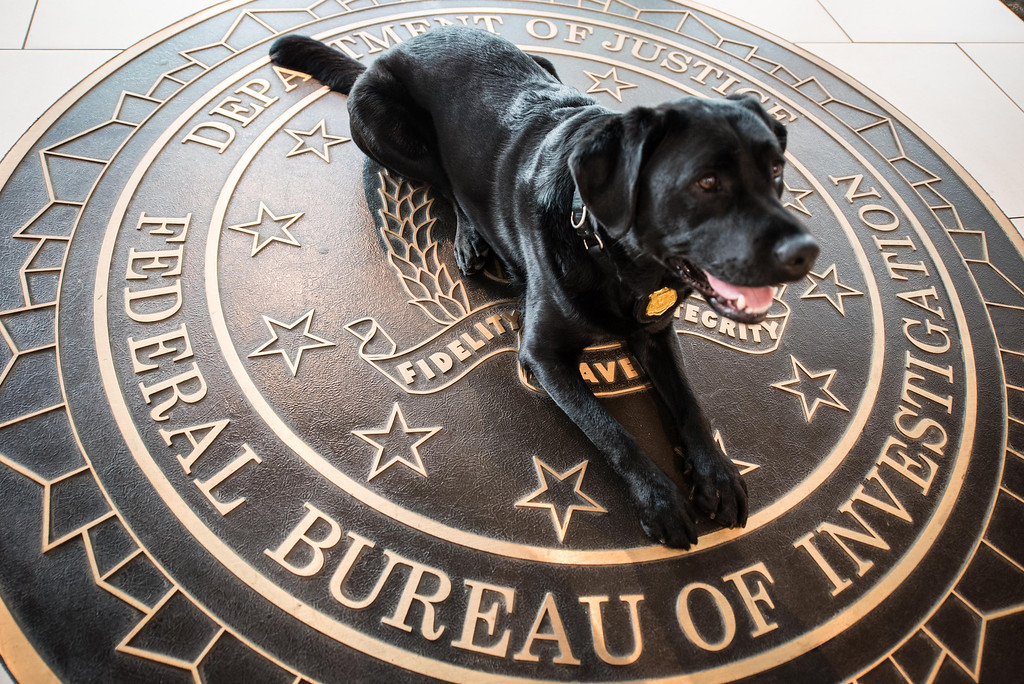 . Playing a role in law enforcement are the FBII K-9s.