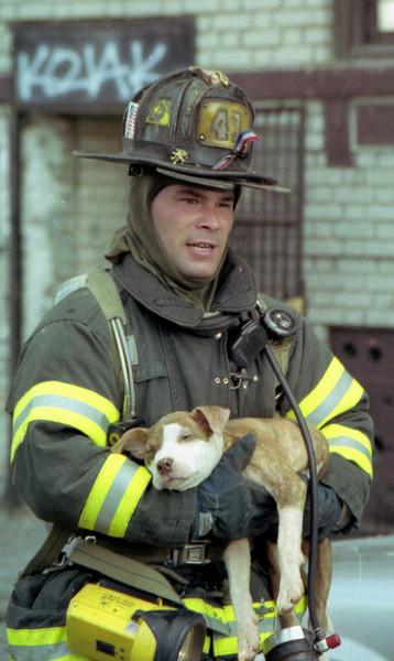 Bronx 75-2368 (March - 2003)