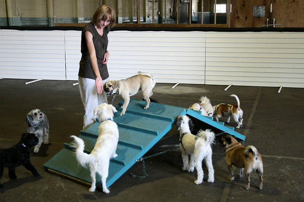 Lucky Dogz daycare