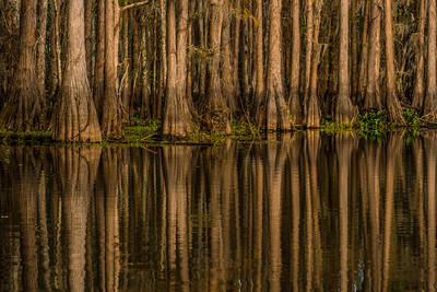 SHINGLE CREEK  3