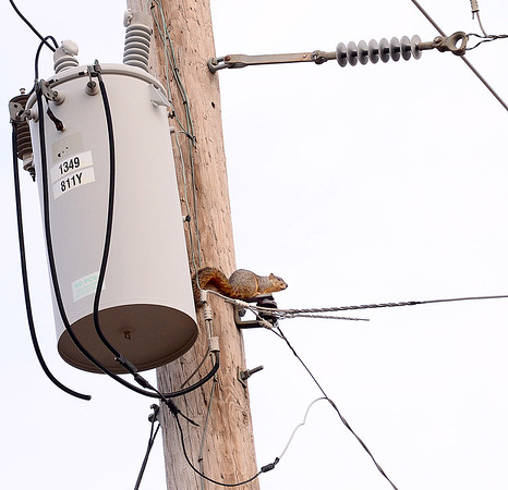 Kevin Harvison | Staff photo<br /> A squirrel sits near a transformer watching as life continues to move underneath.