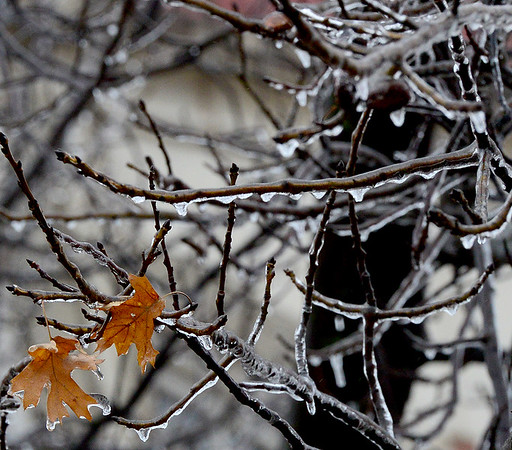 Kevin Harvison | Staff photo<br /> Ice covers two lonely leaves on a tree Thursday morning in McAlester.