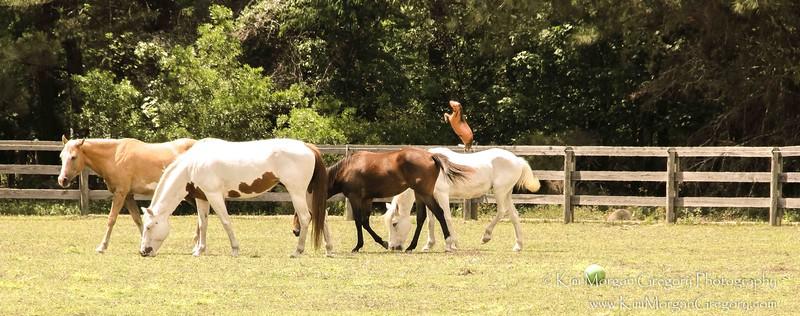 HELP A HORSE DAY | CARNIVAL L.E.A.R.N. HORSE RESCUE