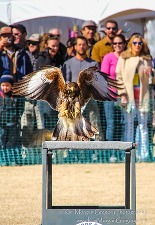BIRDS OF FLIGHT DEMONSTRATION