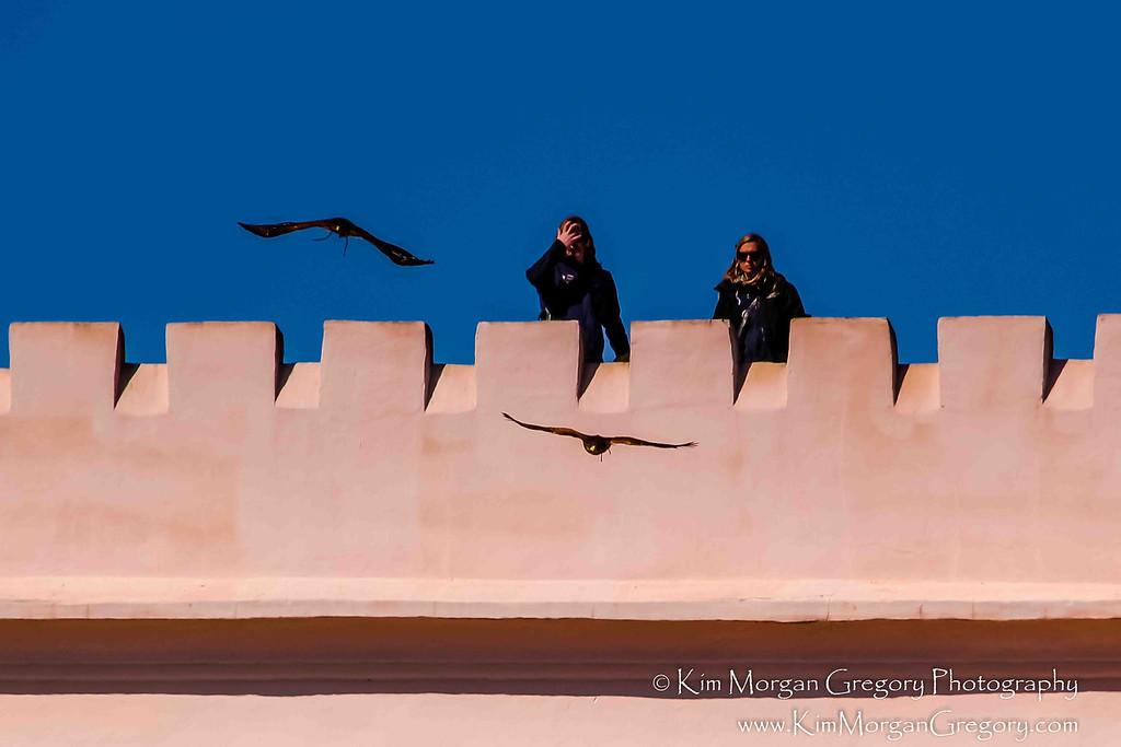 BIRDS OF FLIGHT DEMONSTRATION