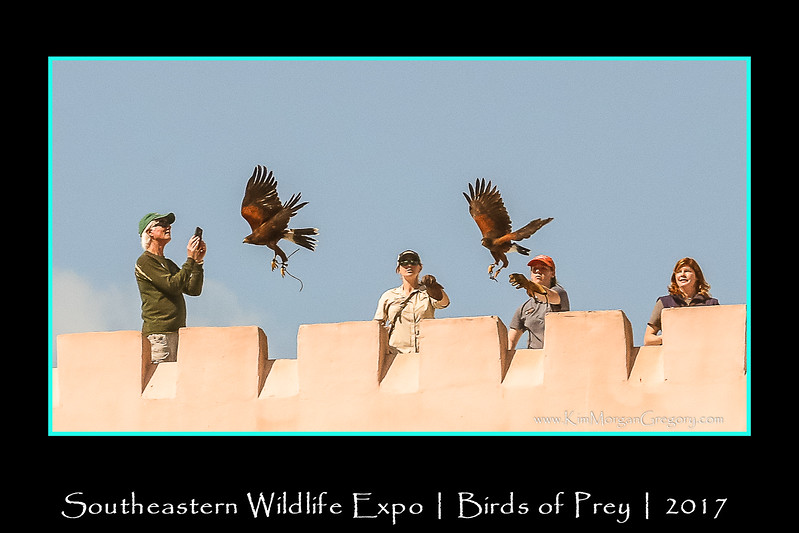 SOUTHEASTERN WILDLIFE EXPO | Charleston SC | 2017