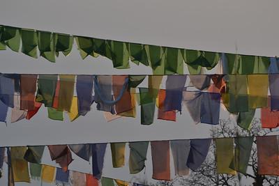 Darjeeling 2014