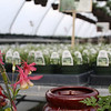 Greenhouse full of baskets and plants in waiting.