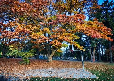 Olive in HIawatha park amidst a large, beautiful fall tree.