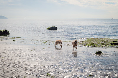 Olive chases Bailey at Double Bluff Beach on Whidbey Island, WA.