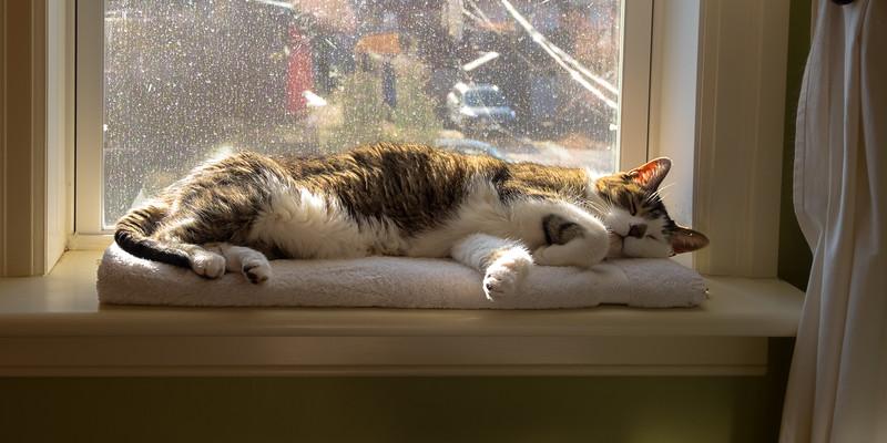 Indy enjoying a sunny windowsill in March.