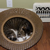 Indy in his new Orbit Cat Pod
